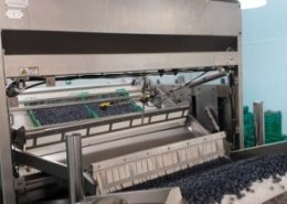 BBC Technologies unveils tray tipper to automate fruit delivery