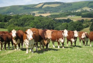 Philippines beef imports from UK expected to be worth over US$44mn