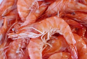 Shrimp farms in India and Vietnam show marked improvements in energy usage