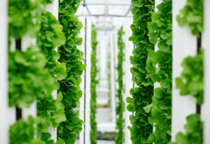 Bayer vertical farming singapore