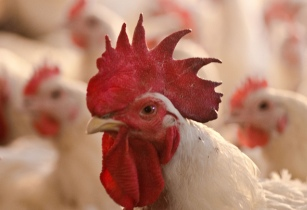 Cargill expands poultry operations