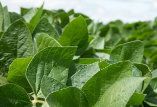 Golden Harvest Winter Agronomy Summits Soybean
