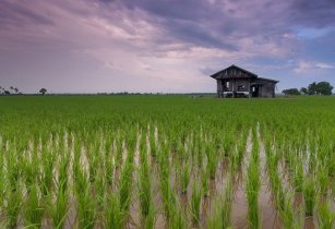 Research and agricultural innovation in Lao PDR benefiting smallholders
