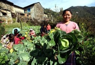 Nepal agri