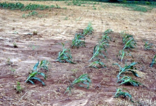 Tropics susceptible to soil erosion: International study