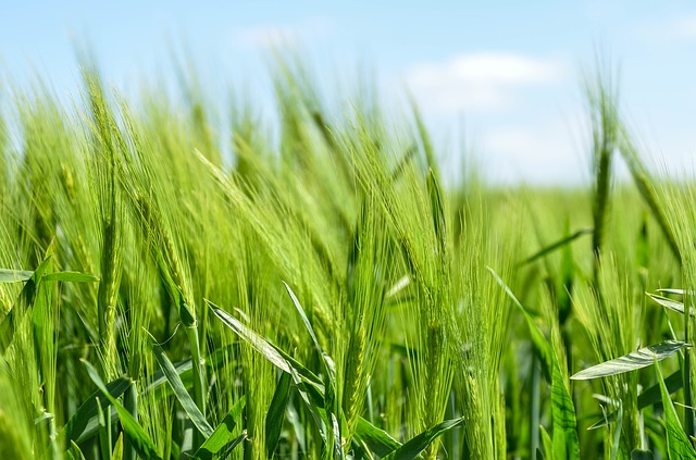 Biotechnology to improve crop performance