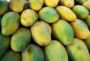 mango erichavir flickr