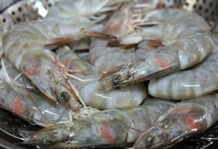 shrimp-vietnam