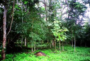 Forest of Sai Yok National Park