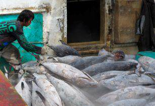 Indonesia Tuna Cccefalon Wikimedia Commons